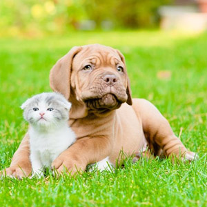 Veterinarian in Clarksville, TN - About Us